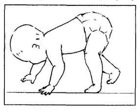 pozycja niedźwiadka